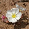 apt phoenix: desert flowers