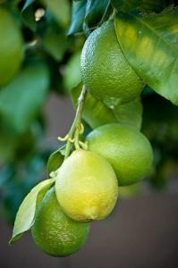 rent phoenix: lemons