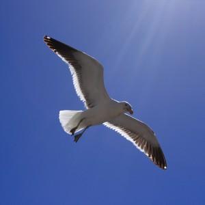 apts phoenix: gull