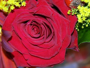 apts phoenix: rose