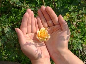 apts phoenix: hand