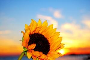 apts phoenix: solarflower